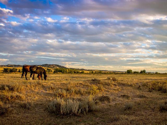 ranch%20horses%20_edited.jpg