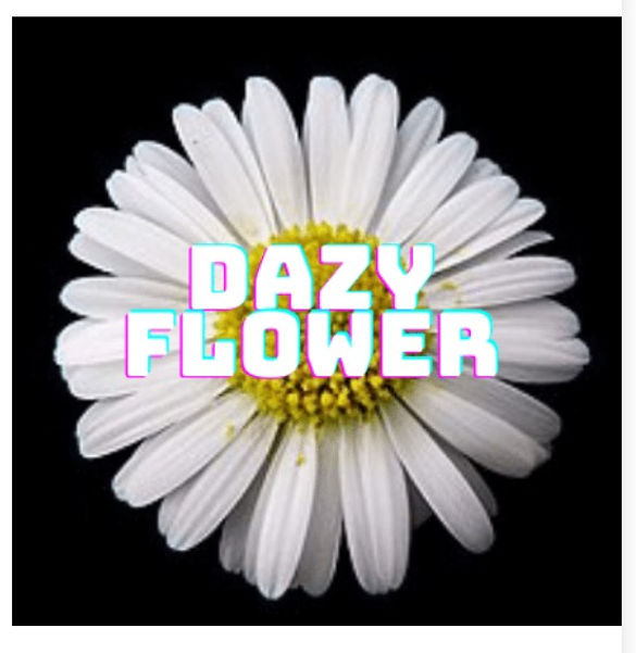 Dazy flower.jpg