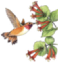 Humbird.jpg
