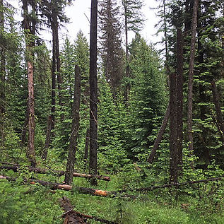 Forests-sq-sm.jpg