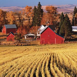 hayes farm.sm.jpg
