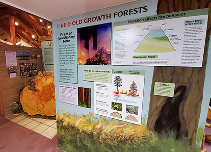 Fire and Old Growth.sm.jpg