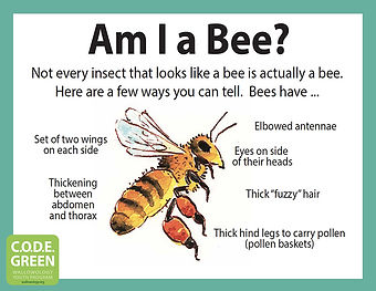 Am-I-a-Bee.cvr.sm.jpg