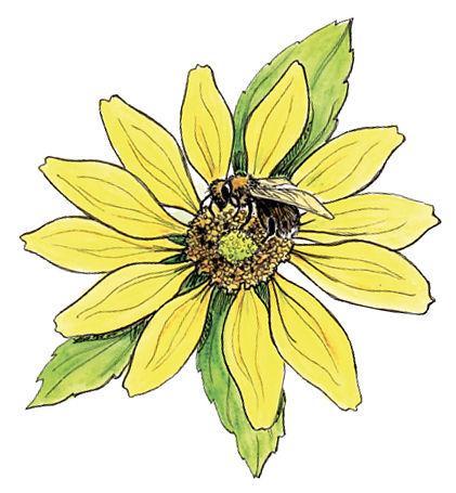 Bee+flower.jpg