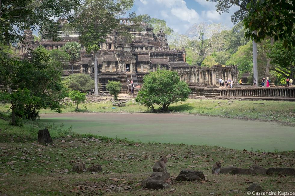 Angkor Thom Monkeys