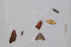 Close up of Moths