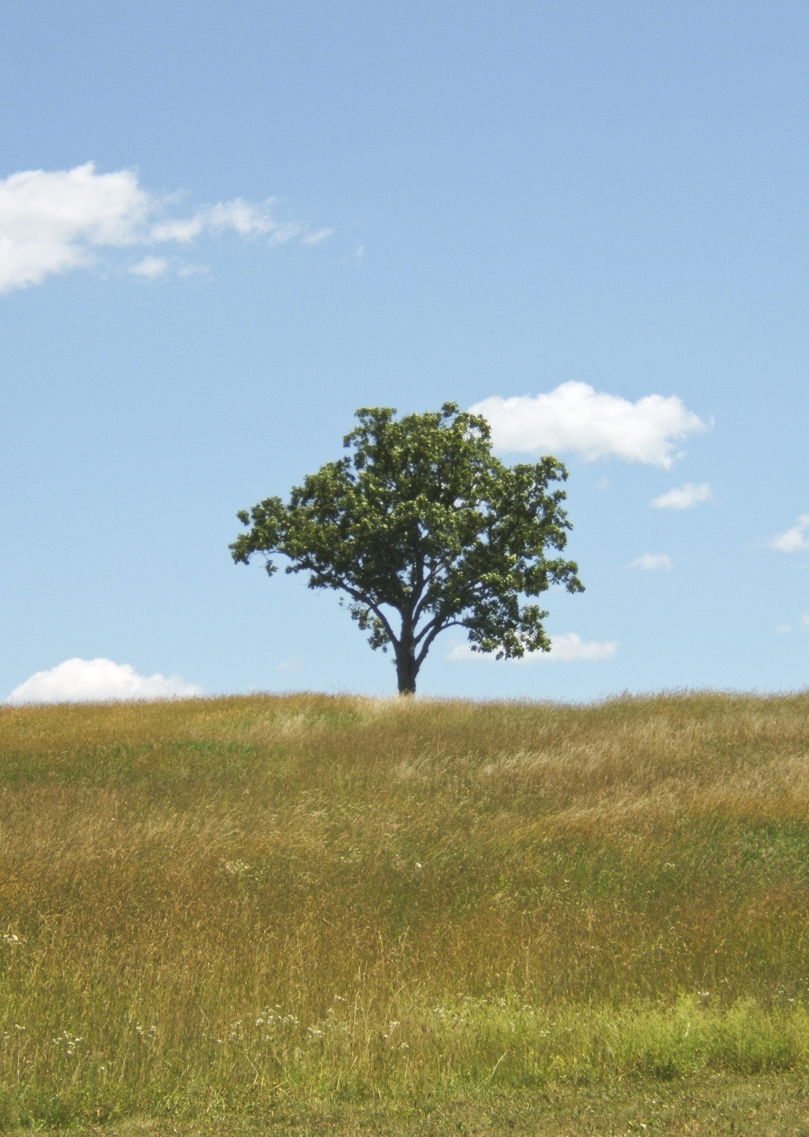 Storm King Tree