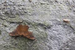 Moth on Rock