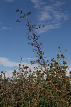 Orange Flower and the Sky
