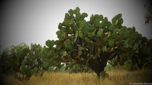 Catcus Tree