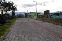 The chicken crossed the road...