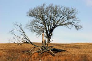 Bull Shoals Tree