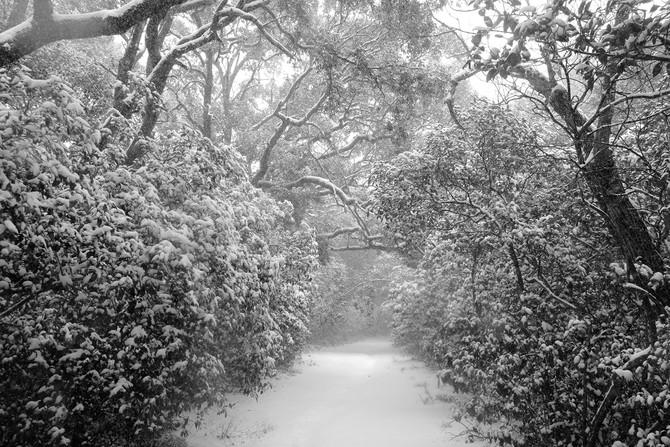 Sous la neige en 2018