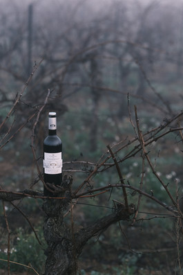 vin vigne hiver couleur.jpg