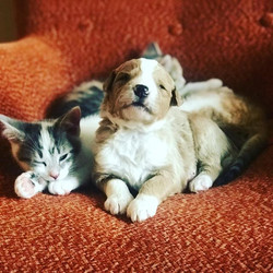 ❤️🐶🐱As pups are opening their eyes and