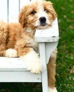 "Tarragon ""Nap-time chair_ I'm feeling th"