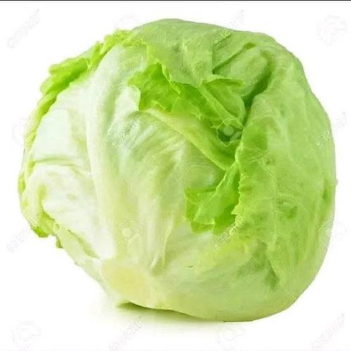 Head Lettuce 1pcs
