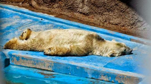 el-zoologico-de-mendoza-en-argentina-sigue-maltratando-a-sus-animales 03.jpg