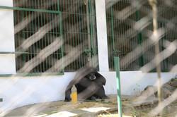 Zoo Luján