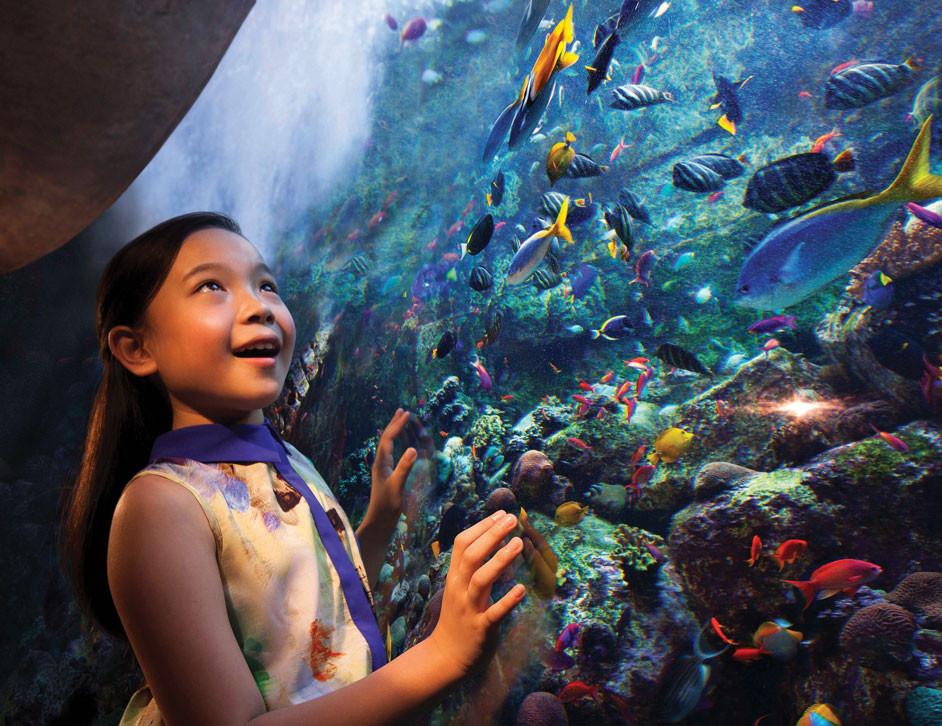 Dubai travel guide: Aquarium at Atlantis