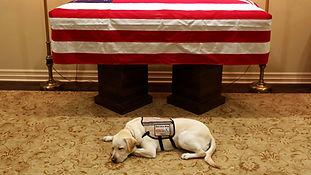 41 SERV DOG - SULLY.jpg