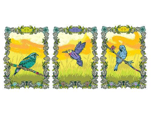 Birds Series Combo