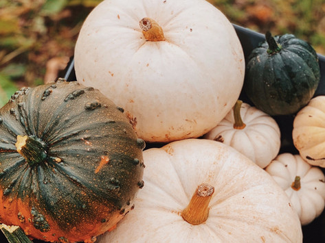 Where to go Pumpkin Picking in and around Rutland this October