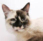 My Cat, Kizmet