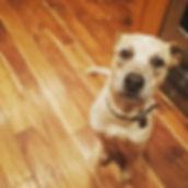 My dog Flint