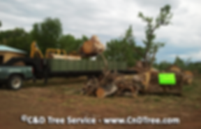 tree cutting, tree removal, stump removal by C&D Tree Sevice