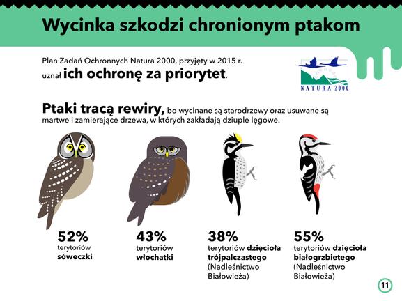 Białowieża_gatunki chronione
