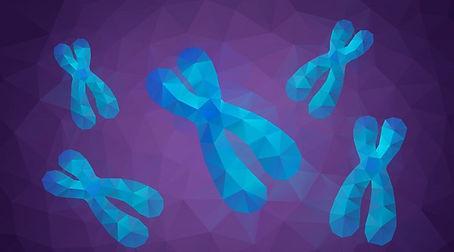 whatisachromosome-02.jpg