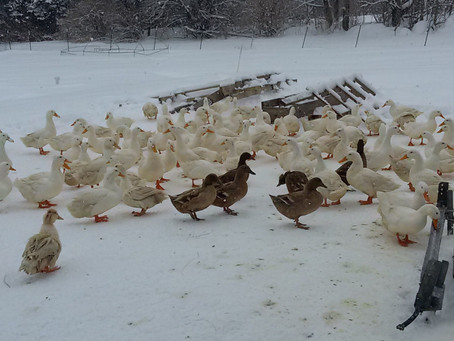Who, me? A chicken farmer?!