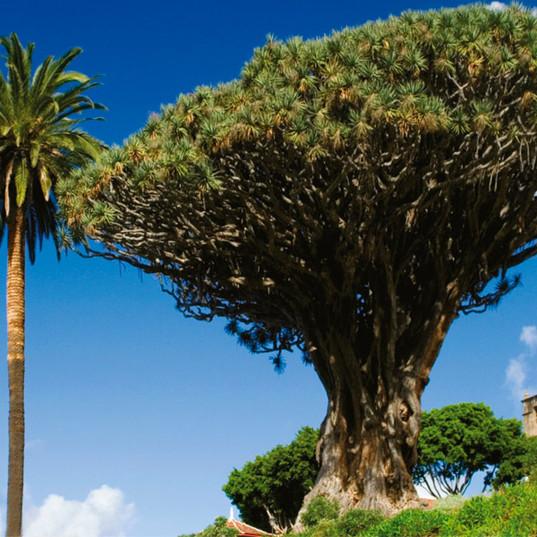 Tenerife009_tcm359-165713.jpg