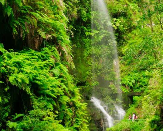 bosque_de_los_tilos-la_palma.jpg