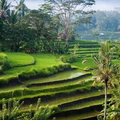 indonesia-wallpapers-6385714.jpg