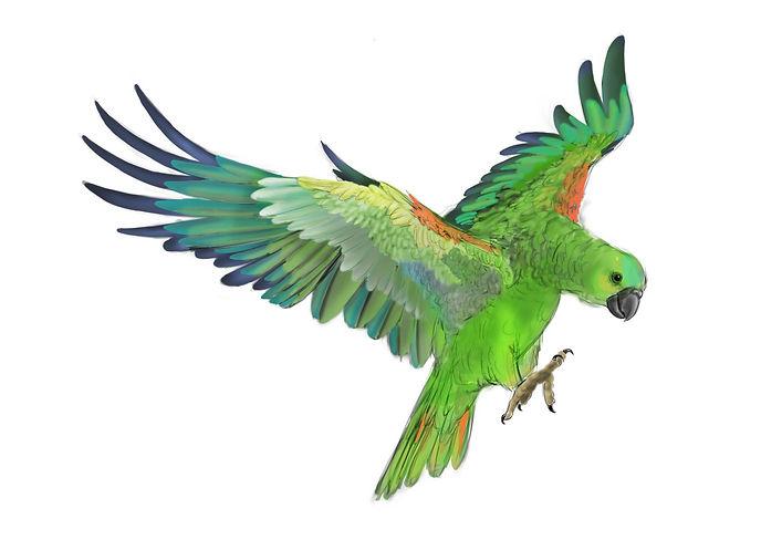 parrot_done.jpg