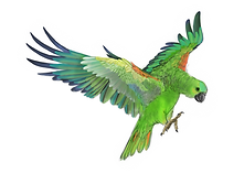 parrot_done_edited.png