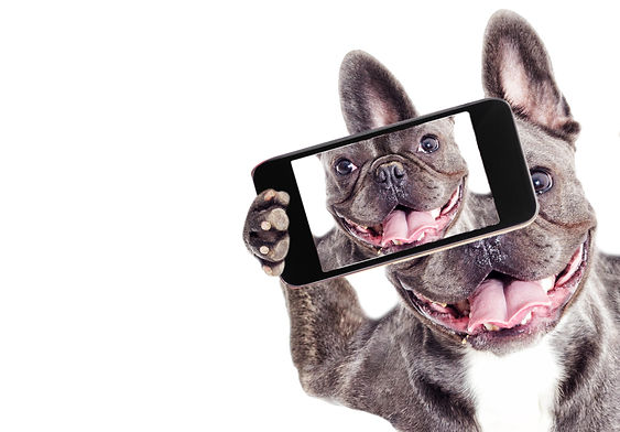 French-Bulldog-dog-Does-selfie-on-the-ph