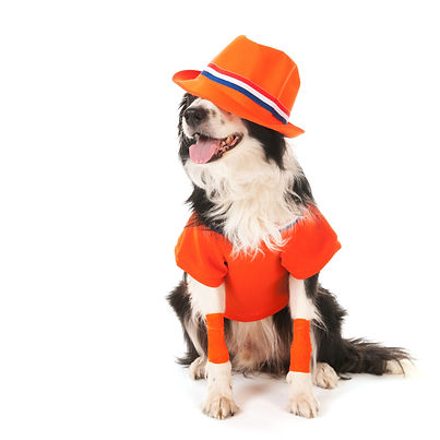 Dog as Dutch soccer fan isolated over wh