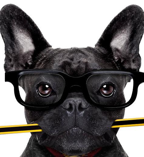 Office Worker Dog_edited.jpg