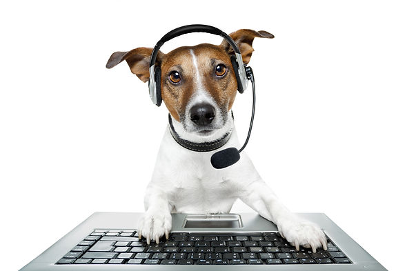 dog using a computer.jpg