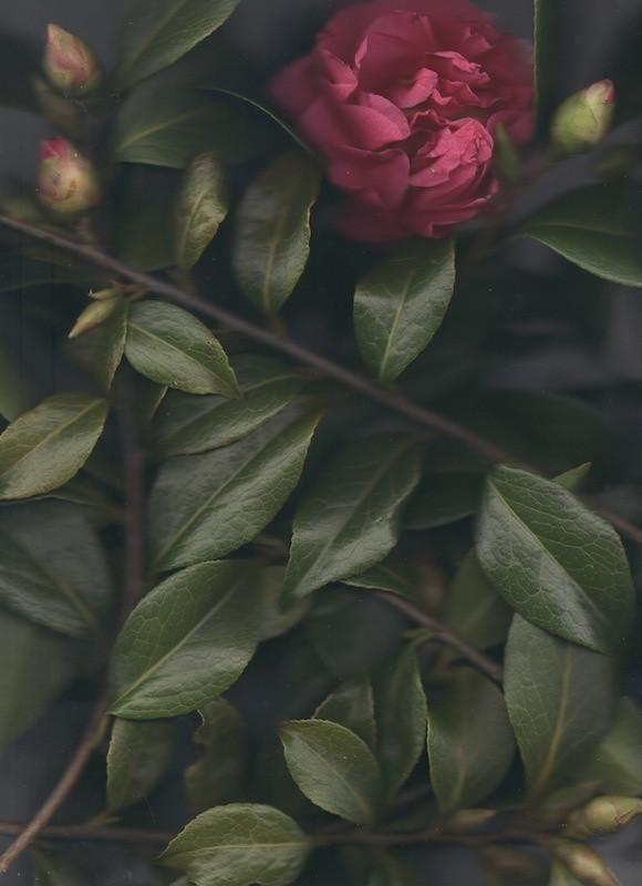 1331-10704159-flower_3_jpeg.jpeg
