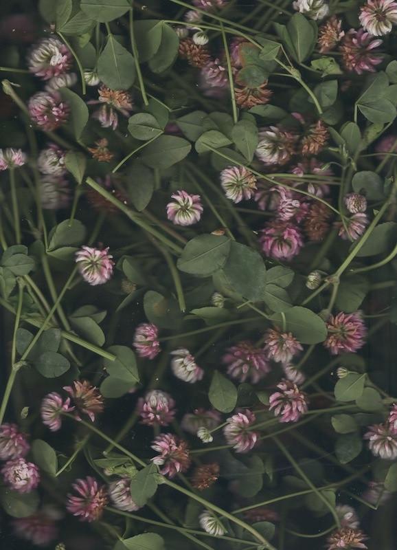 1331-10704166-flower_40_jpeg.jpeg