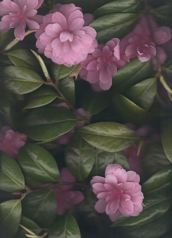 1331-10704163-flower_28_jpeg.jpeg