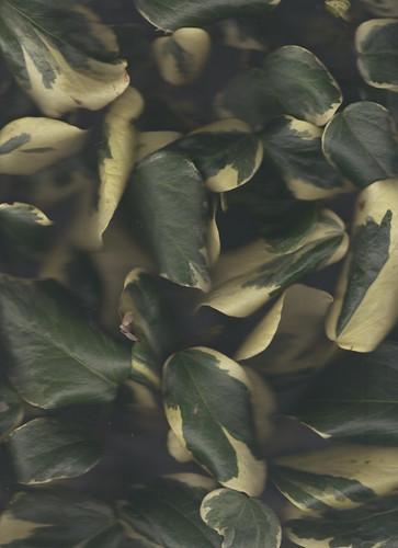 1331-10704162-flower_22_jpeg.jpeg