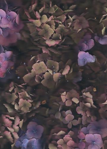 1331-10704165-flower_37_jpeg.jpeg
