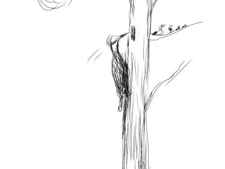 The Early bird....