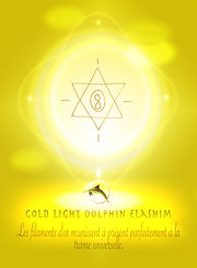 13.1 Gold light dolphin Elashim Protecti