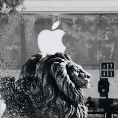 Le lion et la pomme